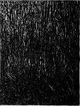Black still life - 80x60 cm